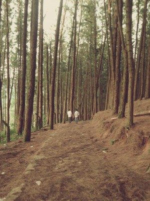 Beautiful Trees in Forest Free Photo 2